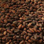 Fève de cacao - huile essentielle bio pour la cuisine