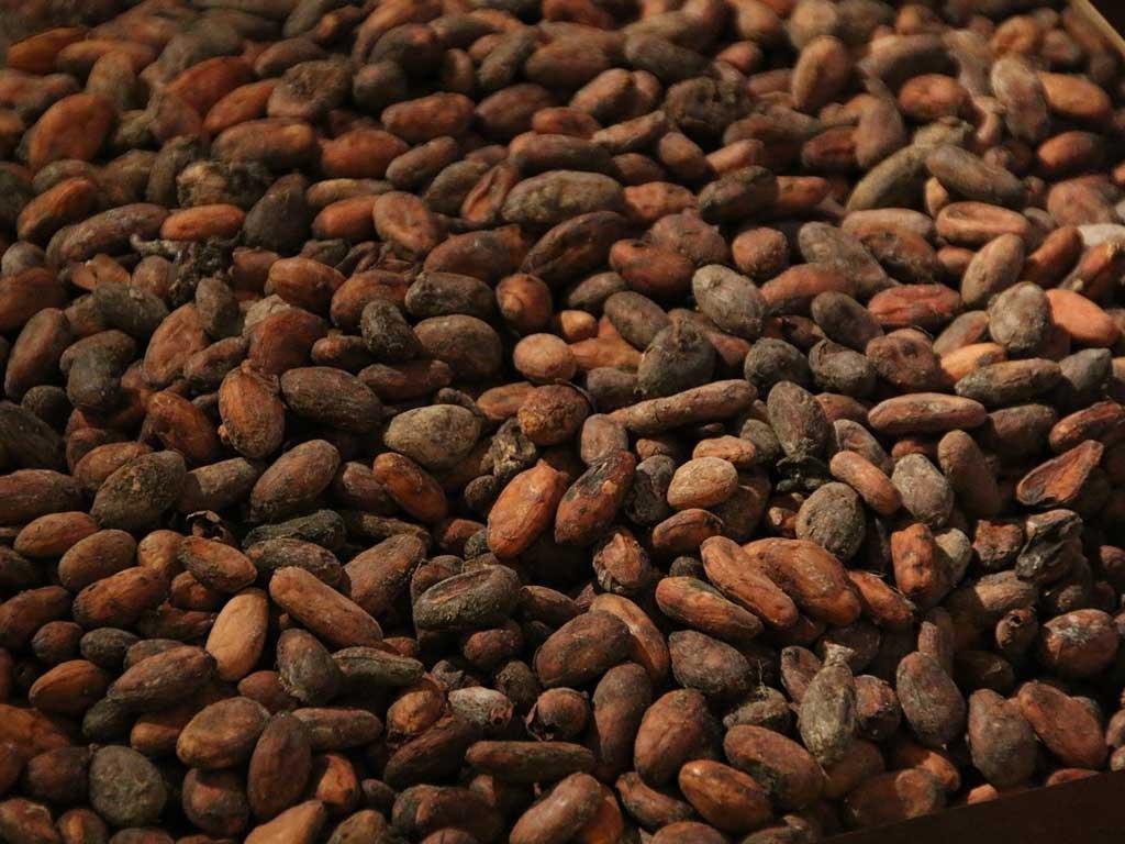 Fève de cacao - absolue bio pour la cuisine