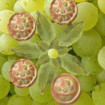 Amandines aux raisins et cardamome