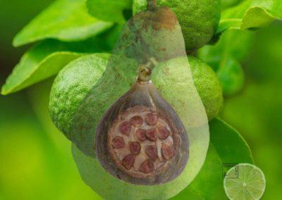 Poire, figue et bergamote sur sablé noisette