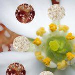 Brioche légère à la fleur d'oranger