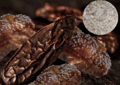 Brioche vraie moelleuse et fine à la fève de Tonka sauvage