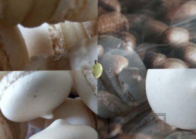 Macarons nuages fève de cacao et pâte d'amande