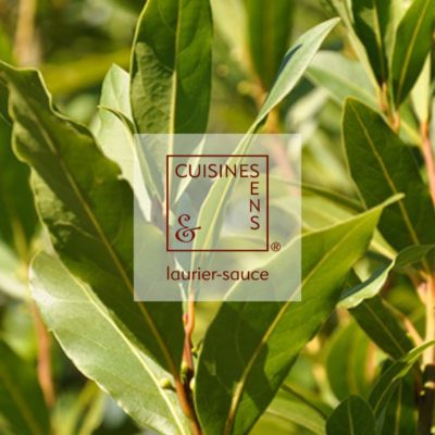 laurier sauce bio - huile essentielle bio culinaire